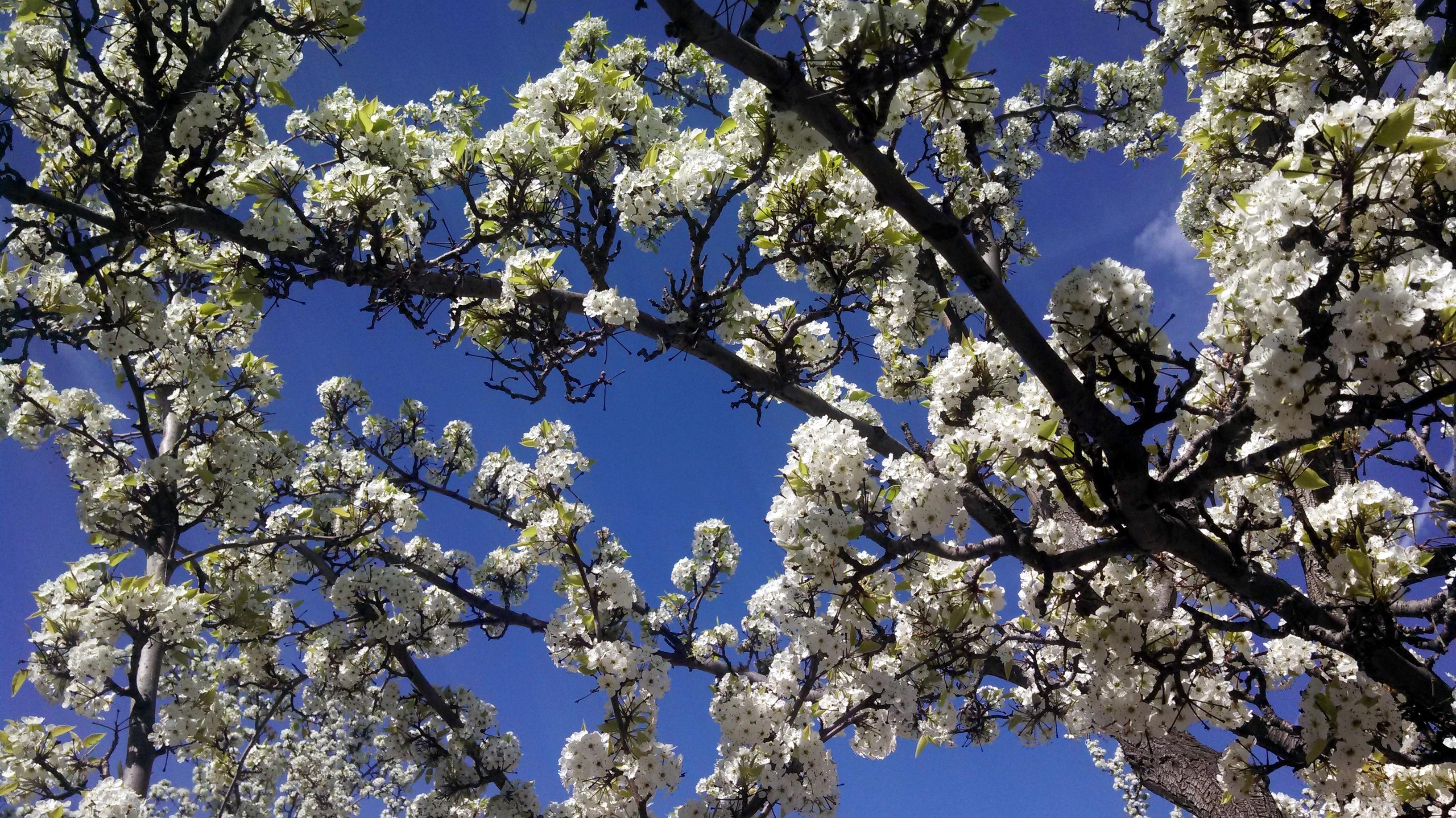 Flowering Trees Kellyosullivan