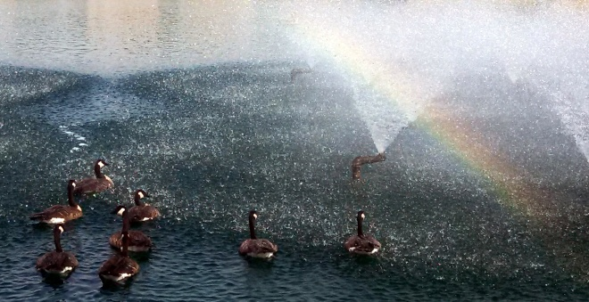 rainbow geese